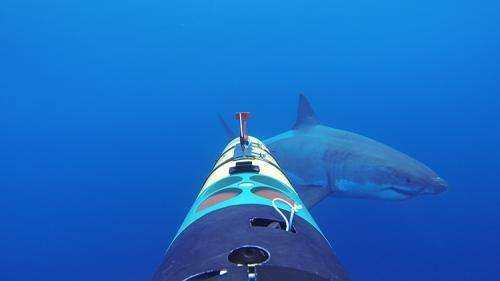 REMUS SharkCam captures upclose encounters with great whites