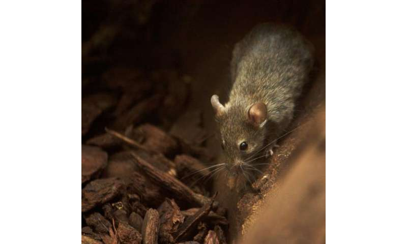 Research calls for a new diet classification for mammals