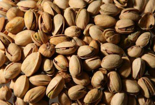 Researchers say eating nuts and acorns may have helped hunter-gatherers survive 15,000 years ago in northern Africa but the prac