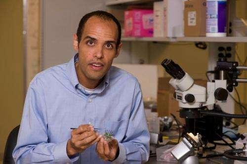 Rice researcher rebooting 'deep brain stimulation'