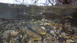 River Fish: Seek Cover!