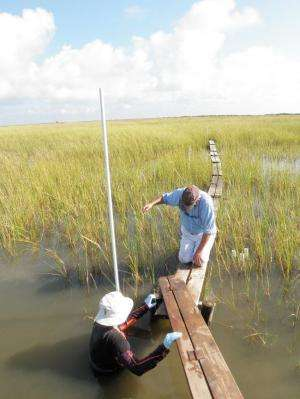 Scientist gets more support to study Deepwater Horizon spill impact on coast