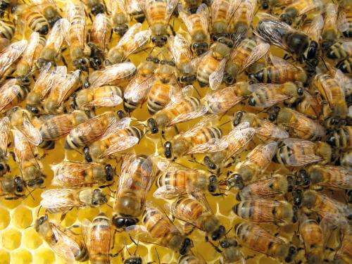 Scientists flying to the rescue of bees