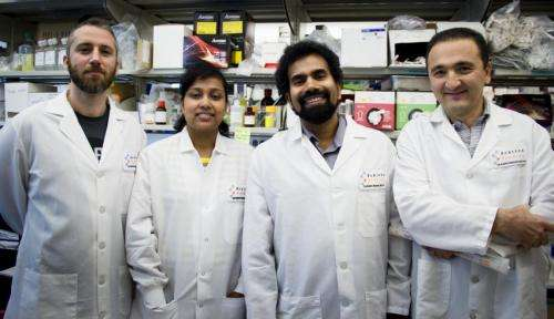 Scripps Florida scientists offer new insight into neuron changes brought about by aging