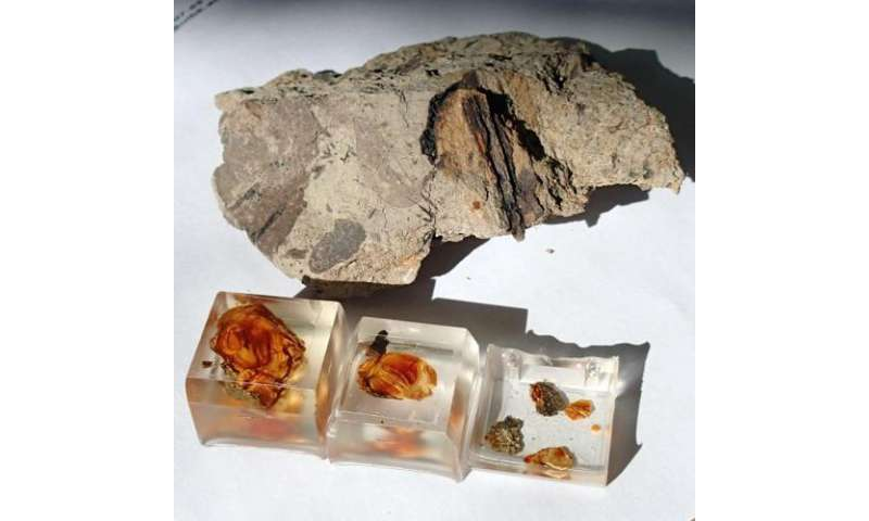 Secrets of dinosaur ecology found in fragile amber