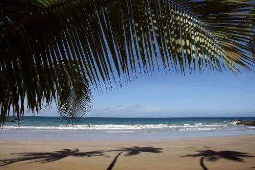 Silhouettess of palm trees are seen on the sand in a beach in Bacolet, Tobago on June 6, 2009