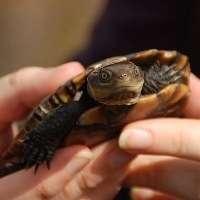 Slow but sure progress to tortoise milestone