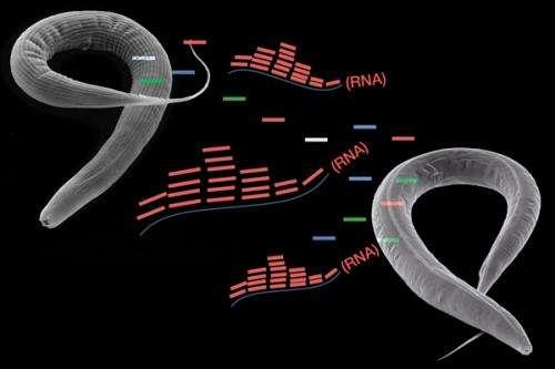 Small RNA transmission