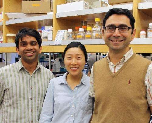 Solving a long-standing mystery, scientists identify principal protein sensor for touch