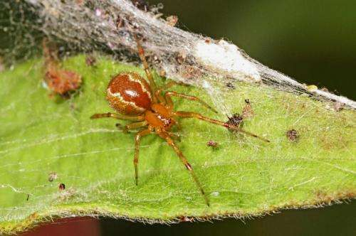 Spiders: Survival of the fittest group