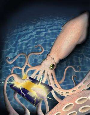 Squid skin protein could improve biomedical technologies, study shows