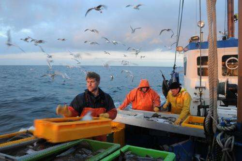 Stratification determines the fate of fish stocks in the Baltic Sea