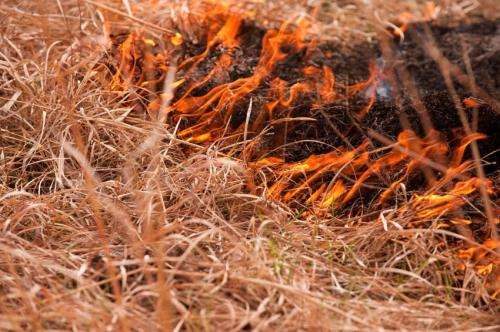 Study finds benefits to burning Flint Hills prairie in fall and winter