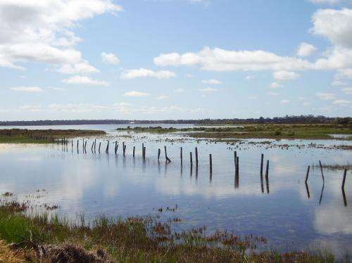 Study finds ingredient to Canning River recovery