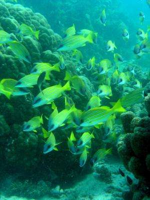 Study finds marine protected areas inadequate for protecting fish and ocean ecology