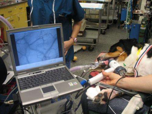 Study monitors effects of IV fluid on dog circulation during surgery