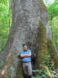 Study of dead wood in old-growth Iranian forest provides information for forest management