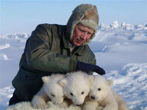 Study: Polar bears disappearing from key region