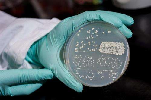 Study shows cellular RNA can template DNA repair in yeast
