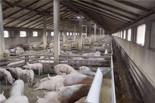 Success installing wastewater treatment plants on slaughterhouses