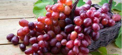 Sustainable skincare range created from waste products of grapes