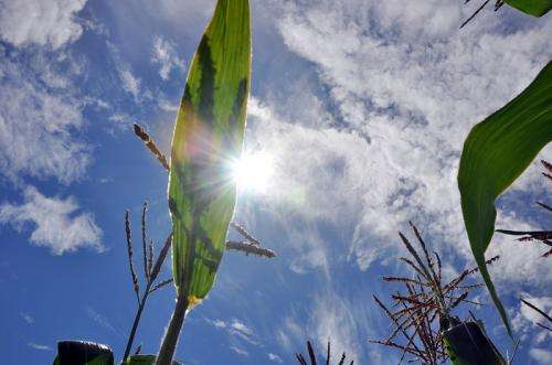 Switching on a dime: How plants function in shade and light
