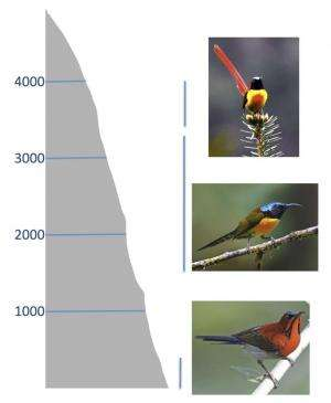Competition for ecological niches limits the formation of new species