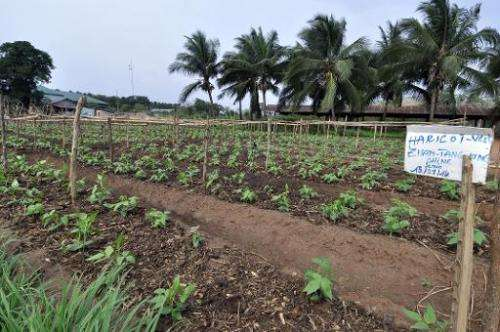 The Centre Songhai, an organic farm in Porto Novo, Benin, on January 30, 2014