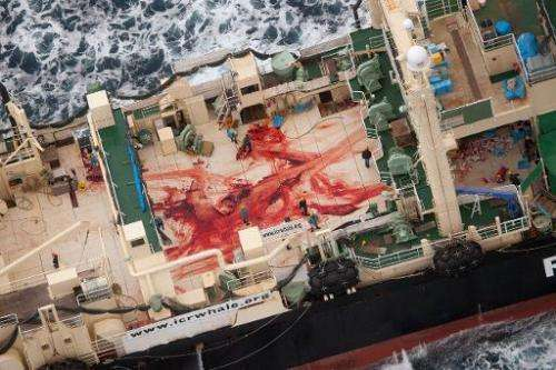 The deck of the Japanese whaling ship Nisshin Maru is covered with blood, in a picture taken by Sea Shepherd Australia on Januar