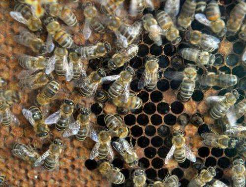 The five steps to help stop the decline of bees urged by the British government's environment department come ahead of a nationa