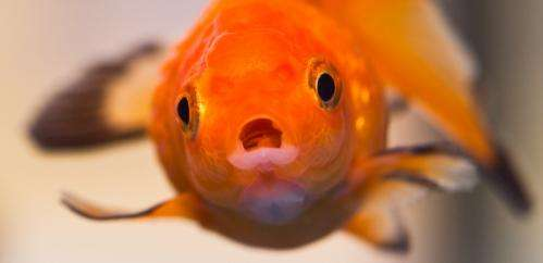 The goldfish test that can change your behaviour