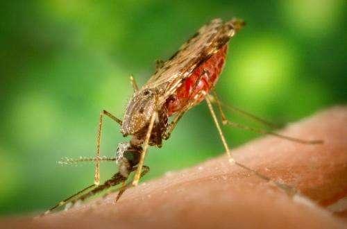 The malaria pathogen's cellular skeleton under a super-microscope