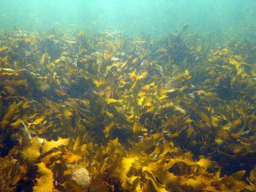 Time to value our temperate reefs
