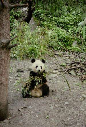 Tinkering with the Tao of pandas