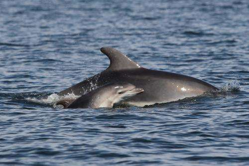 Tourism poses a threat to dolphins in the Balearic Islands