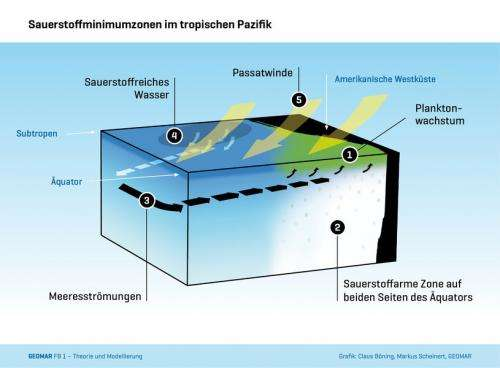 Trade winds ventilate the tropical oceans
