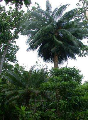 Trees' diminished resistance to tropical cyclone winds attributed to insect invasions