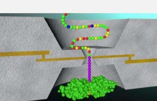 Amino acid fingerprints revealed in new study