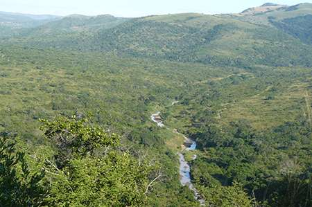 Tropical grassy ecosystems under threat