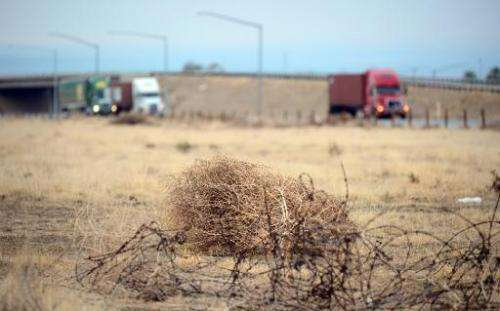 Tumbleweed rolls across a dried out landscape in central California's Kern County as trucks head south toward the Grapevine to b