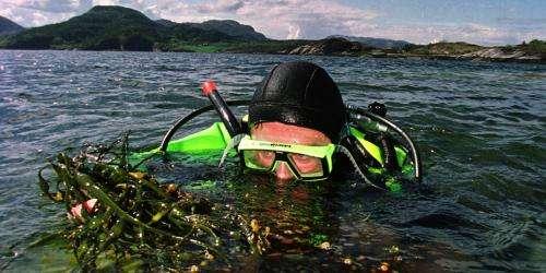 Turning humble seaweed into biofuel