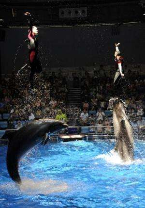 Two aquarium trainers are pushed out of the water by dolphins during a summer attraction at the Aqua Stadium in Tokyo on August
