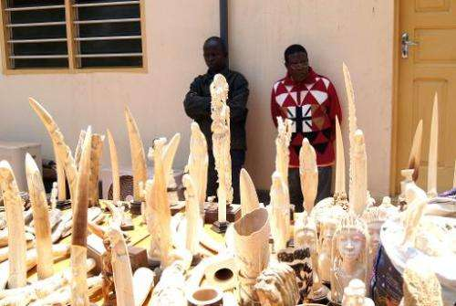 Two men stand guard over ivory seized by the Togolese police, as they are exhibited for journalists in Lome on August 9, 2013