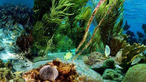 Underwater pictures shared innovatively for science collaboration