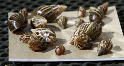 USDA seizes more than 1,200 illegal giant snails