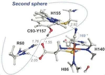 UT Arlington research may unlock enzyme's role in disease