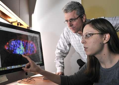 UT Southwestern cancer biologists link tumor suppressor gene to stem cells