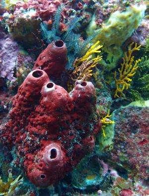 Sponge bacteria, a chemical factory