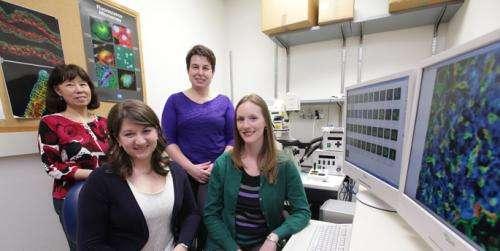 Vanderbilt diabetes researchers track cells' ability to regenerate