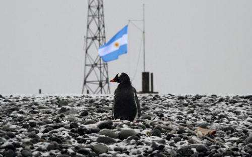View of a penguin at the Argentinian military base of Camera in Antarctica taken during a mission of the Brazilian Navy's Oceano